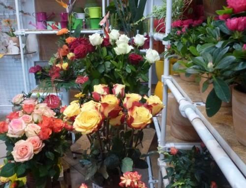 Schnittblumen: Auswahl #6