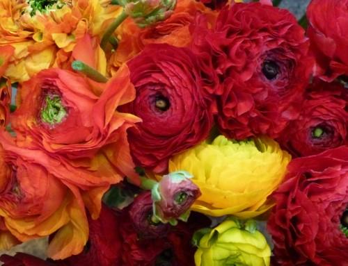 Schnittblumen: Auswahl #8